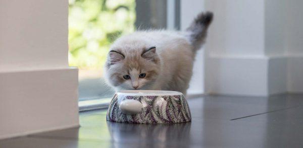 Katten voeding